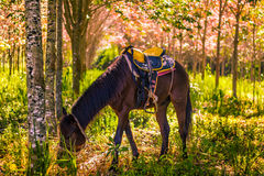 Horse under the tree. Land outdoors standing domestic piebold grazing color animal colour nature farm green landscape field horse grass Royalty Free Stock Image