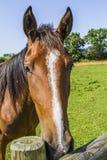horse landbouwbedrijf, schone het paardstallen van Nice Royalty-vrije Stock Afbeelding