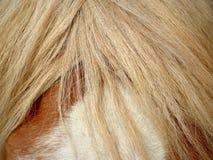 horse landbouwbedrijf, schone het paardstallen van Nice Royalty-vrije Stock Fotografie