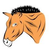 horse landbouwbedrijf, schone het paardstallen van Nice Stock Foto's