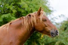 horse landbouwbedrijf, schone het paardstallen van Nice stock foto