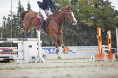 Horse landing after overtake the obstacle at horse jumping compe Royalty Free Stock Image