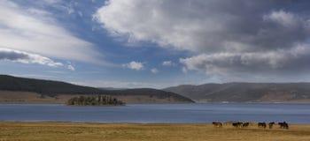 Horse landscape. Landscape with horse.Bulgarian nature Batak dam lake Royalty Free Stock Image