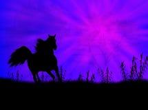 Horse landscape. Black wild horse against a blue landscape Stock Photography