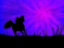 Horse landscape Stock Photography