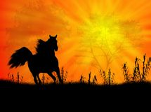 Horse landscape Stock Image