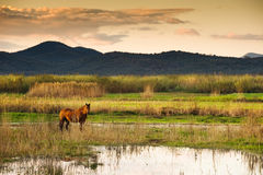 Horse in landscape Stock Image