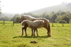 Horse landscape in green meadow Pyrenees Royalty Free Stock Image