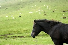 Horse landscape in green meadow Pyrenees Royalty Free Stock Photo