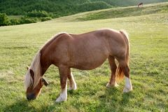 Horse landscape in green meadow Pyrenees Royalty Free Stock Photos