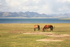 The horse  in a large meadow at Song kul lake ,  Naryn of Kyrgyzstan Stock Photography