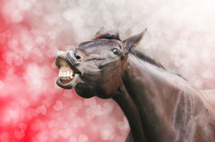 Horse laugh on heart holiday  background Stock Photography