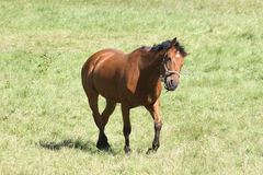 Horse leaning Stock Photo