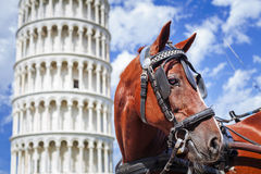 Horse and leaning tower of Pisa .Tuscany,Italy Stock Images