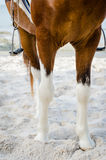 Horse leg. Royalty Free Stock Photo