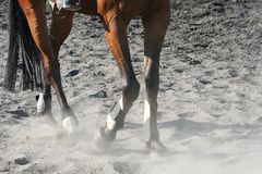 Horse Legs Royalty Free Stock Photography