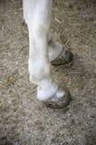 Horse legs Stock Photo