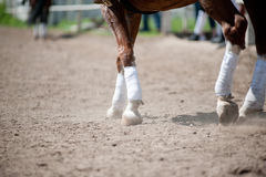 Horse legs Royalty Free Stock Images