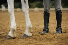 Horse legs and human legs. In the manege royalty free stock image