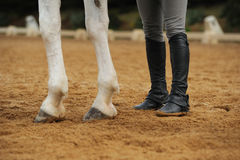 Horse legs and human legs. In the manege Stock Image