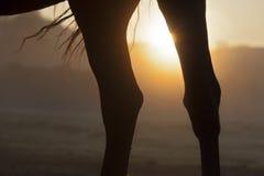 Horse legs Royalty Free Stock Photos