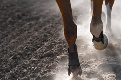 Horse legs running Royalty Free Stock Photography