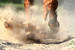 Free Horse Legs Trotting In Dressage Arena Stock Image - 188643981