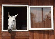 Horse Like Mammal, Horse, Stable, Window Stock Image