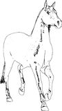 Line Art Horse Sketch Stock Images