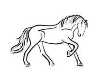 Horse line art sketch. On white stock photos