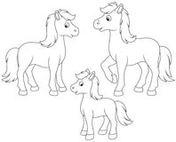 Family of horses. A horse, a little foal and a courser, black and white vector illustrations in funny cartoon style for a coloring book Stock Images