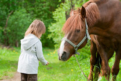 Horse and little girl. Total trust. Big chestnut horse pulls it's neck to little beautiful girl stock images