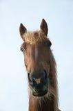 Horse. Local farmers horse funny face Stock Photos
