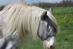 Horse, Long Hair Stock Photos