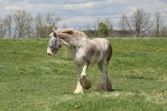 Horse, Long Hair Royalty Free Stock Photo