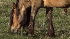 Horse with long Mane Stock Photo
