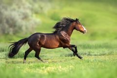 Horse with long mane stock images