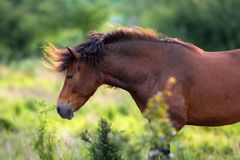 Horse with long mane portrait Royalty Free Stock Photography