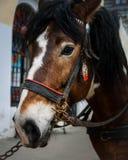 Horse look Royalty Free Stock Photo
