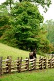 Horse looking. Vertical of horse looking over fence Royalty Free Stock Images