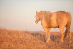 Horse looking away at sunset Stock Images