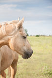 Horse looking eastward Royalty Free Stock Photo