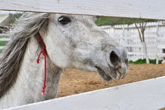 Horse looking through fence Royalty Free Stock Photos