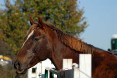 Horse looking out by fence Royalty Free Stock Image