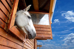 Horse looking outside of the stable. Brown horse looking outside of the stable towards freedom and the blue sky Stock Photo