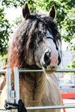 Horse looking over gate with hair in face Royalty Free Stock Images