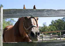 Horse looks through corral fence Stock Photos