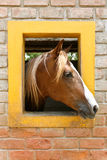 Nat Geo Horse Stock Images