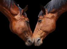 Horse love Royalty Free Stock Photography