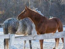 horse love Stock Photography